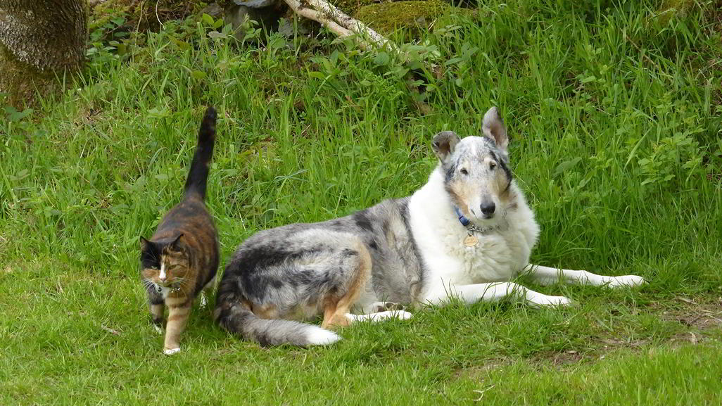 Alfred the smooth collie, and Isadora the tortoise-shell cat.