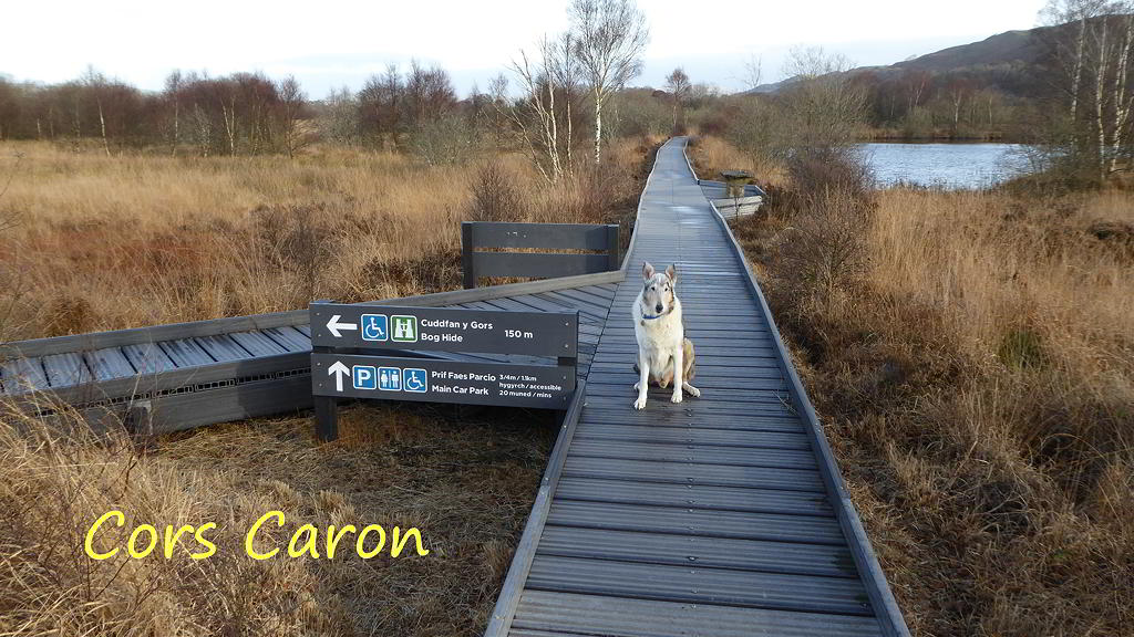 Cors Caron BoardWalk