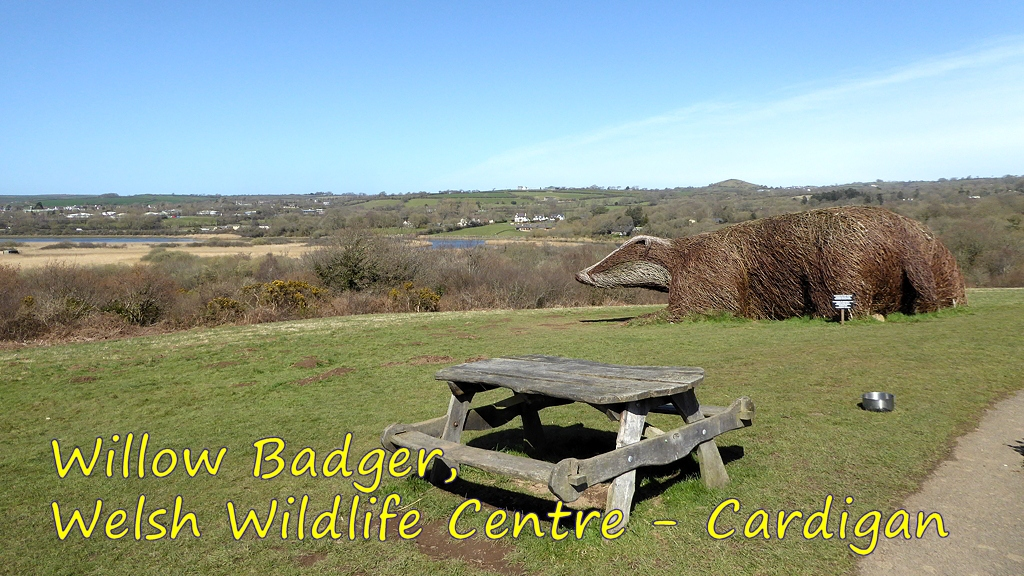 Welsh Wildlife Centre And Willow Badger