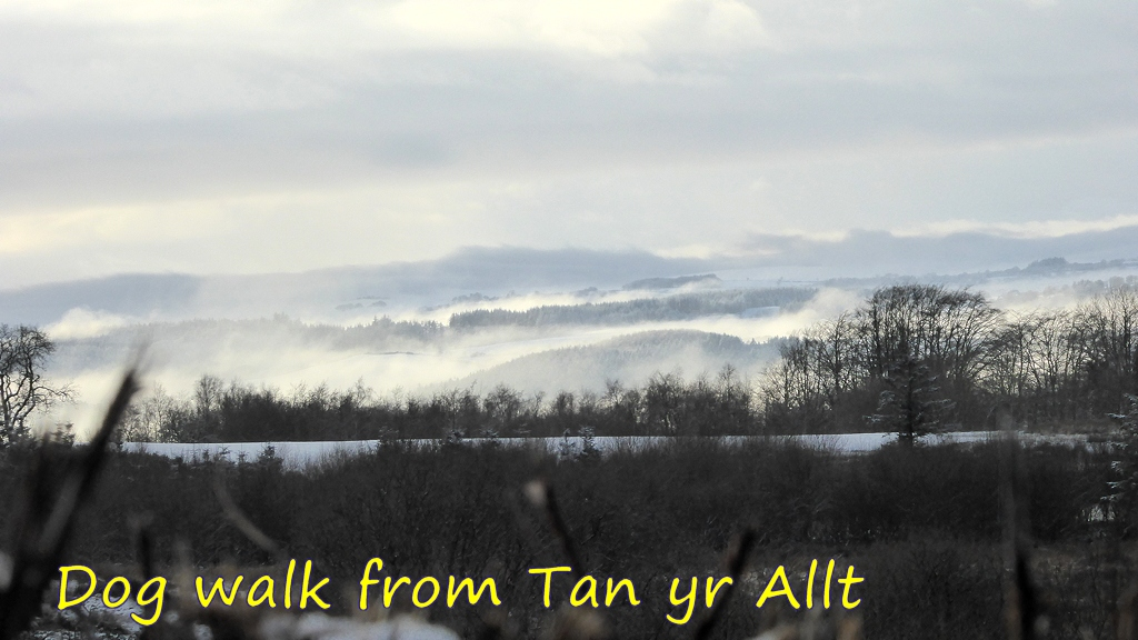 Dog Walk from Tan yr Allt